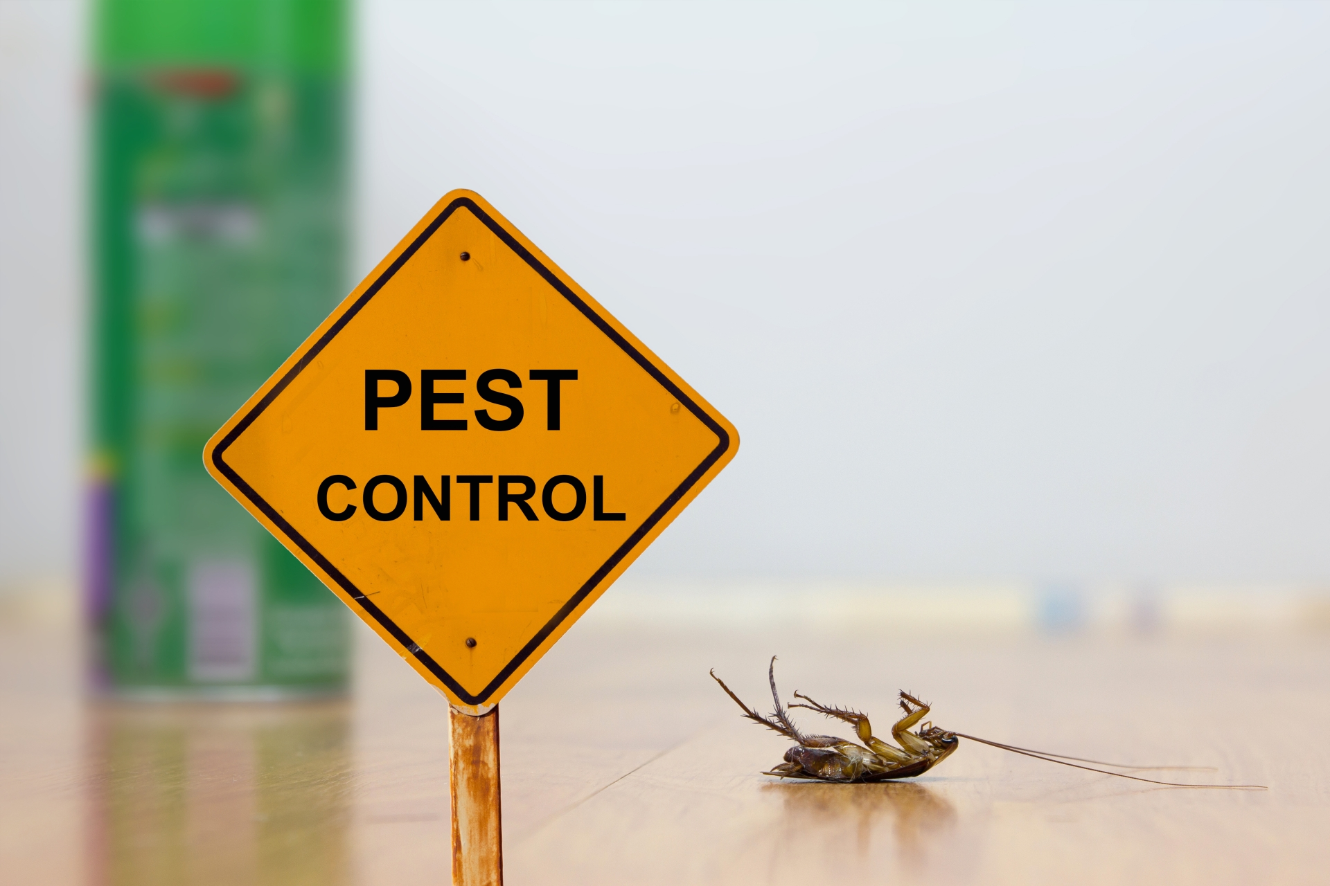 24 Hour Pest Control, Pest Control in Purley, Kenley, CR8. Call Now 020 8166 9746