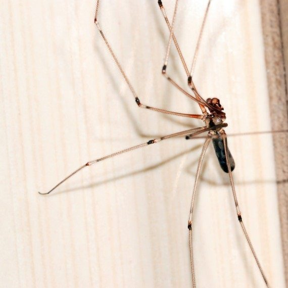 Spiders, Pest Control in Purley, Kenley, CR8. Call Now! 020 8166 9746